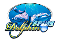 Dolphin Spins